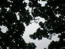 взгляд в небо