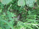 а это кто в траве?