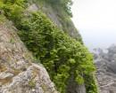 Орешник на скалах