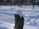 """Пень в снежной """"шапке"""""""