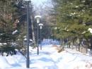Снежная алея
