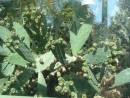 Вид на оранжерею в Ботаническом саду