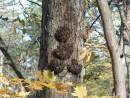 Что на дереве растет?