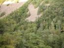 деревья наступают