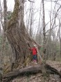 лесной сторож