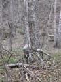 бегающее дерево