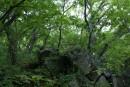 А вдоль тропинки валуны в лесу лежат.
