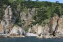 Могильная сосна на скалах полуострова Гамова. Морская прогулка вокруг полуострова Гамова (до морского заповедника). Хасанский район.