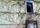 Опутанный старый дом.
