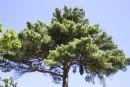 оттенки зеленого на 1 дереве