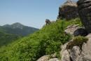 Хребет зубы Дракона и гора Сестра. По дороге к горе Сестра. Лазовский район.