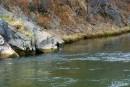 Река Кузнецовка, впадает возле мыса Олимпиады