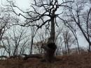 Дерево сложной формы
