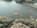 Уютное пристанище морских отшельников