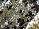 Волна ушла оставив на камнях морских обитателей