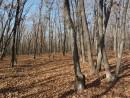Поздняя осень в лесу