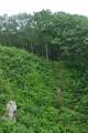 Тропинка в лес.