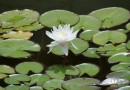 Ботанический сад ДВО РАН и Озеро лотосов на Океанской