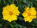 Цветы Бот.сада