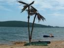 Выросли пальмы в далеком краю