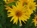 Пчелка села на цветок