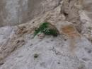 Цветок на песке