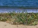 Зеленая трава на берегу
