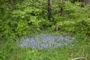 голубая полянка