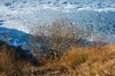 Прибрежный лёд