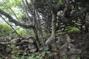 Остатки различных построек и сооружений, возводимых илоу (китайцами, бежавшими из Поднебесной империи)