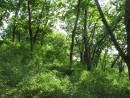 зеленые зайчики