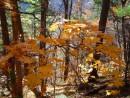 Золотая осень на Фалазе.