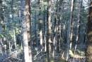 где нет тропы-там частый колючий лес