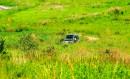 Буйство трав на полуострове