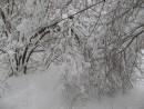 согнуло снегом