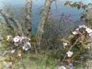 Весна. Остров Герасимова