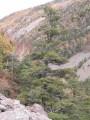 Вид с чайного домика на противоположную гору. Бывший лагерь Ушу. Смольный ключ. Шкотовский район.