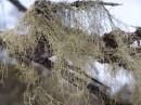 Борода по дороге на гору Пидан. Шкотовский район.