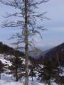 Вид с  горы Пидан. Шкотовский район.