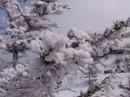 Заснеженные деревья по пути на  гору Пидан. Шкотовский район.