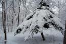 Елка под снегом