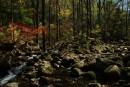 Камни лес