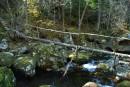 Мост бревно