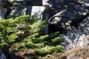 Камни с елками
