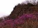 Цветущий багульник и скалы ущелья.  Ущелье щеки Дарданеллы. Партизанский район.