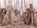 Грибная ферма. грибы Шитаки.  Ущелье щеки Дарданеллы. Партизанский район.