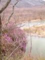 Багульник и река Тигровая.  Ущелье щеки Дарданеллы. Партизанский район.