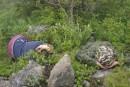 кто там лежит в кустах?
