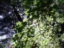 зеленый ажюр