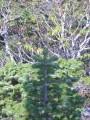 это мы на обрыве, а вершины деревьев, растущих внизу, оказались на уровне наших ног
